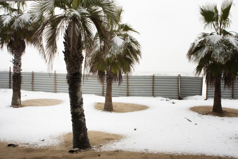 How to keep a palm alive in the winter home guides sf gate - Temperature to keep house in winter ...