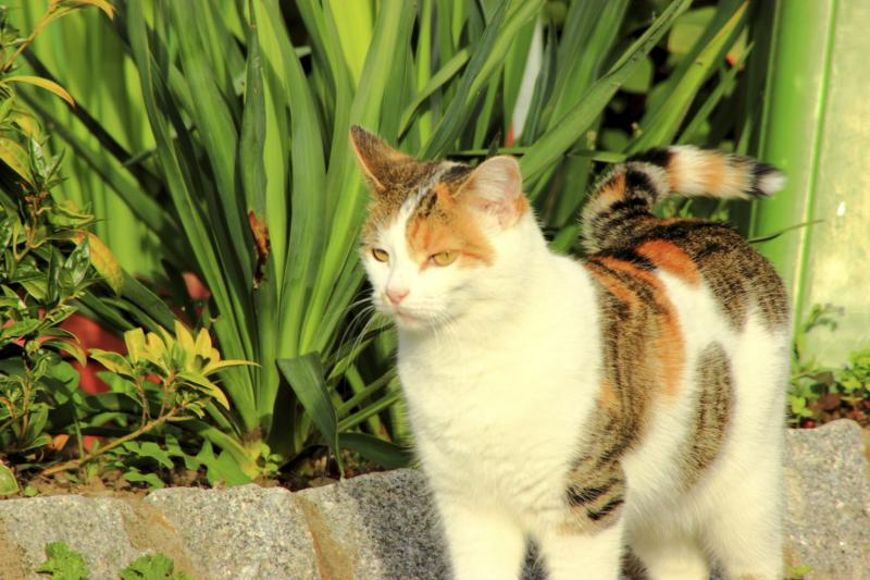 How To Keep Cats Out Of Raised Garden Beds Home Guides