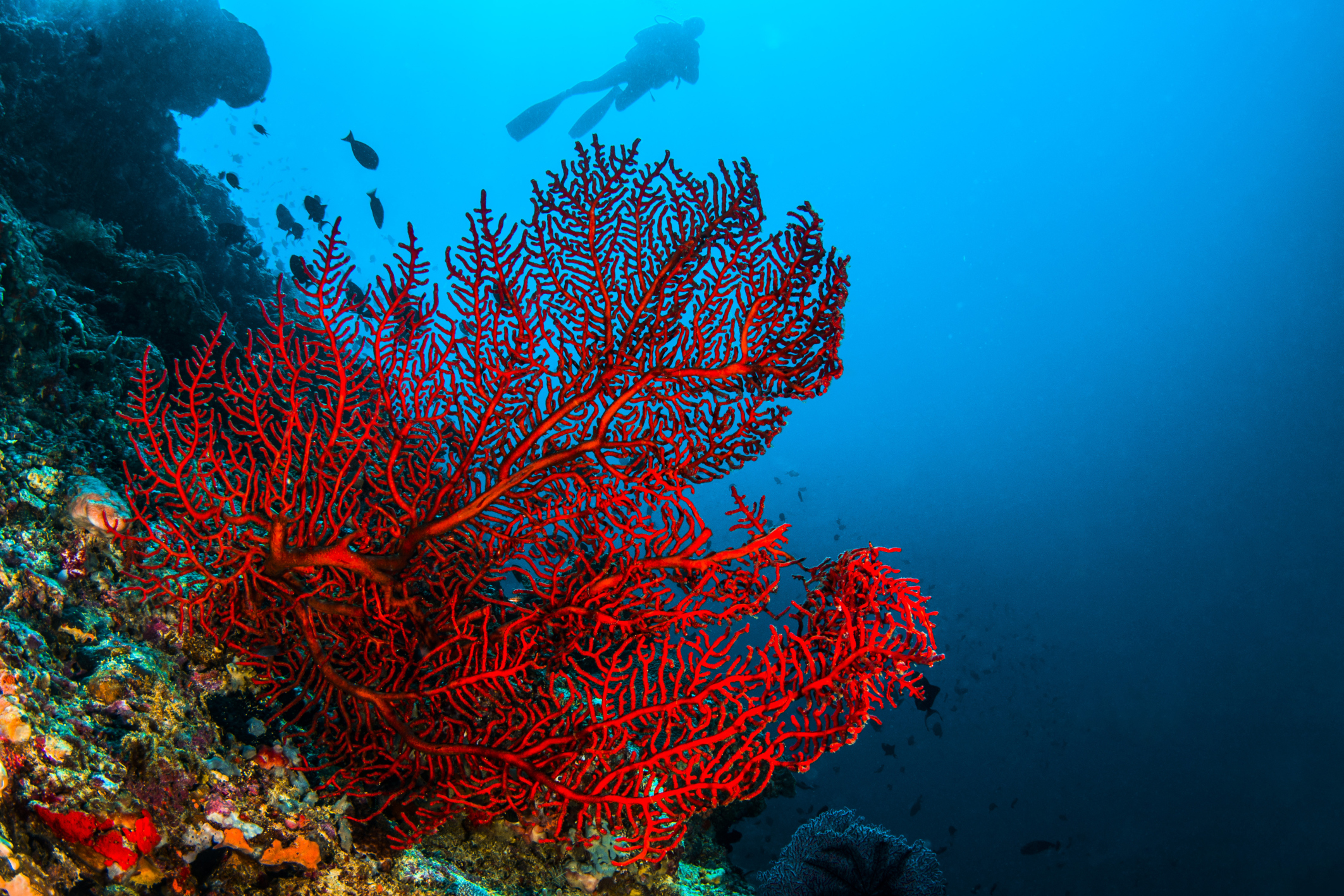 What Are the Healing Qualities of Red Coral? | Healthfully