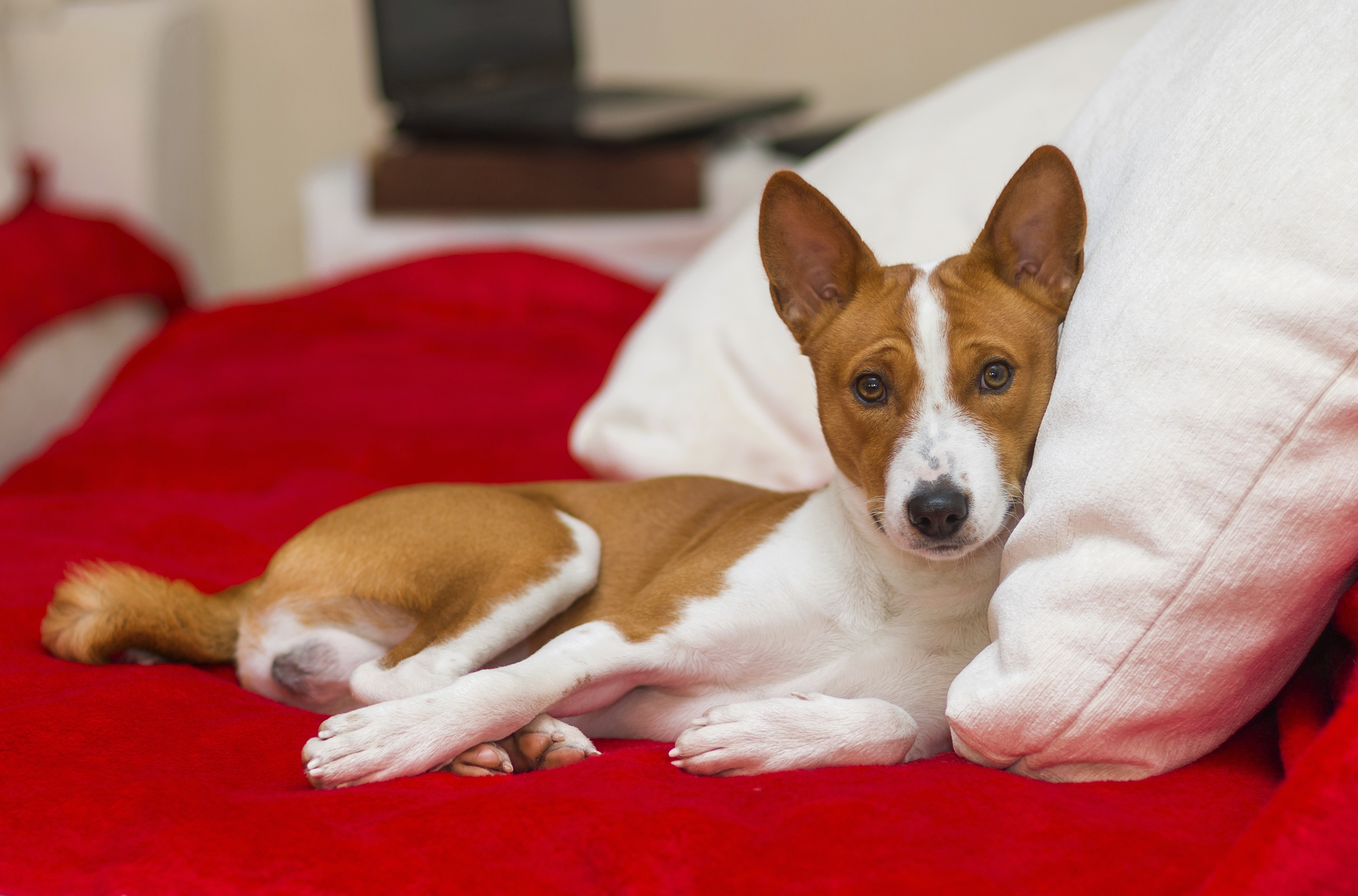 What Is Crude Fat in Dog Food