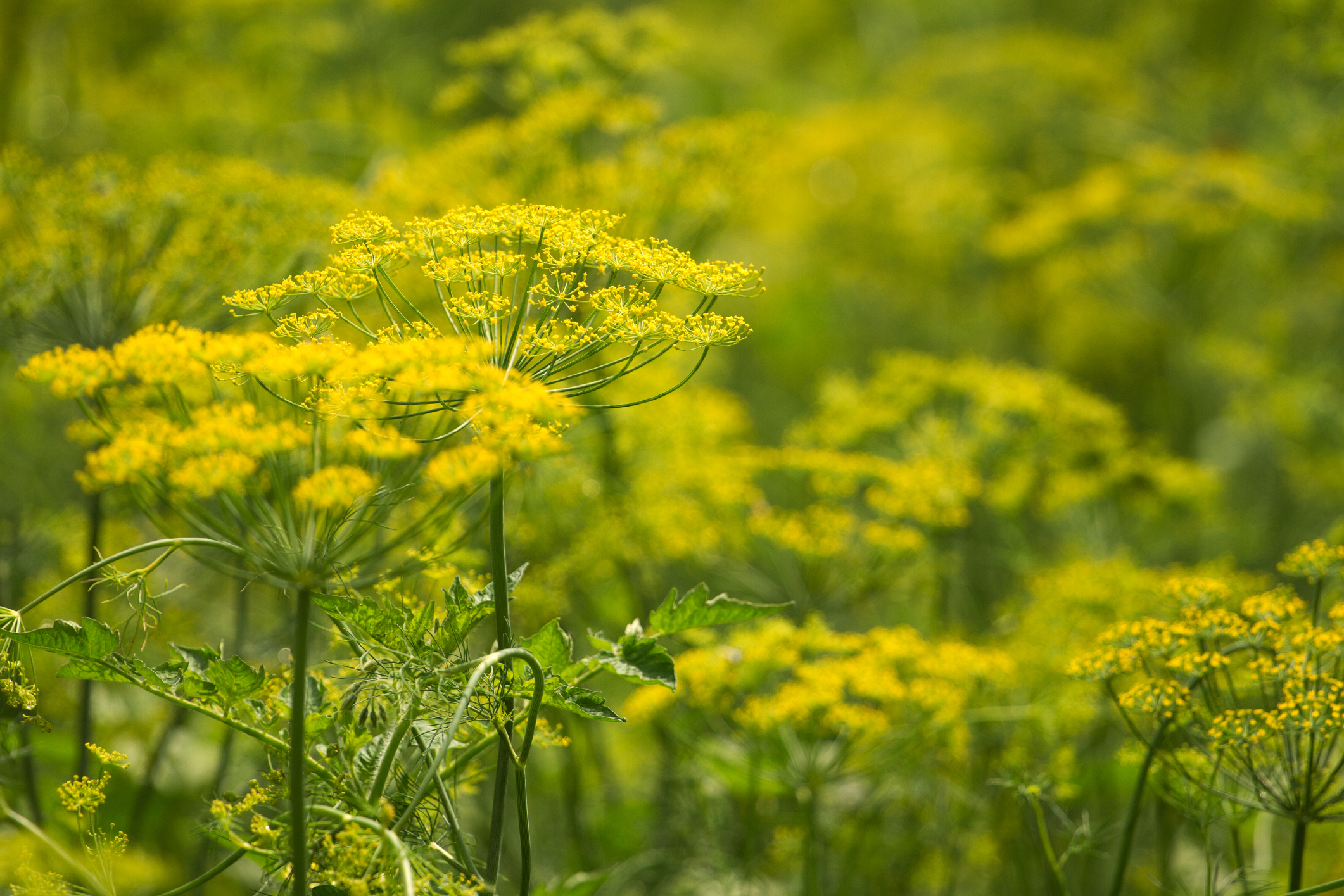 What Herbs Can Bring Moisture to Dry Eyes?