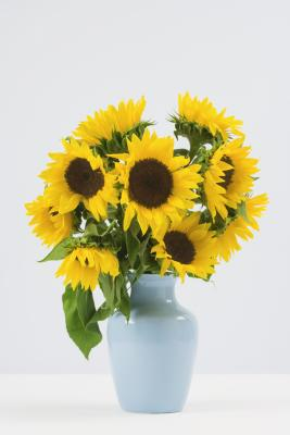 how to cut sunflowers for vase