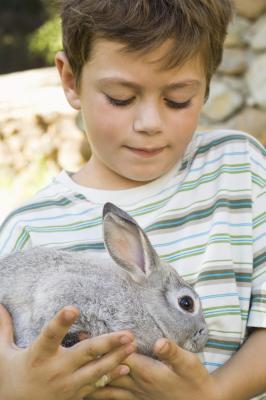 C mo criar a un conejo enano dentro de una casa ehow en - Casas para conejos enanos ...