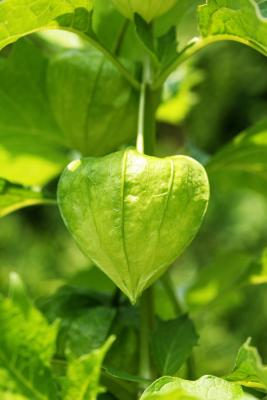 Where is Chlorophyll Found in Plant Cells? | eHow UK