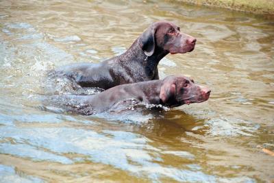 Dog Friendly Beaches Near Annapolis