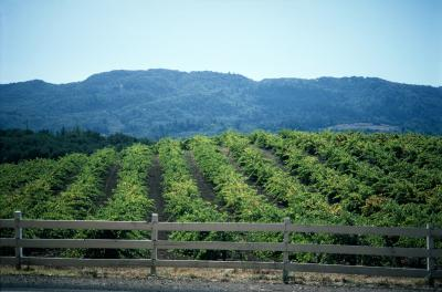 Wine Country Rv Parks In California Usa Today