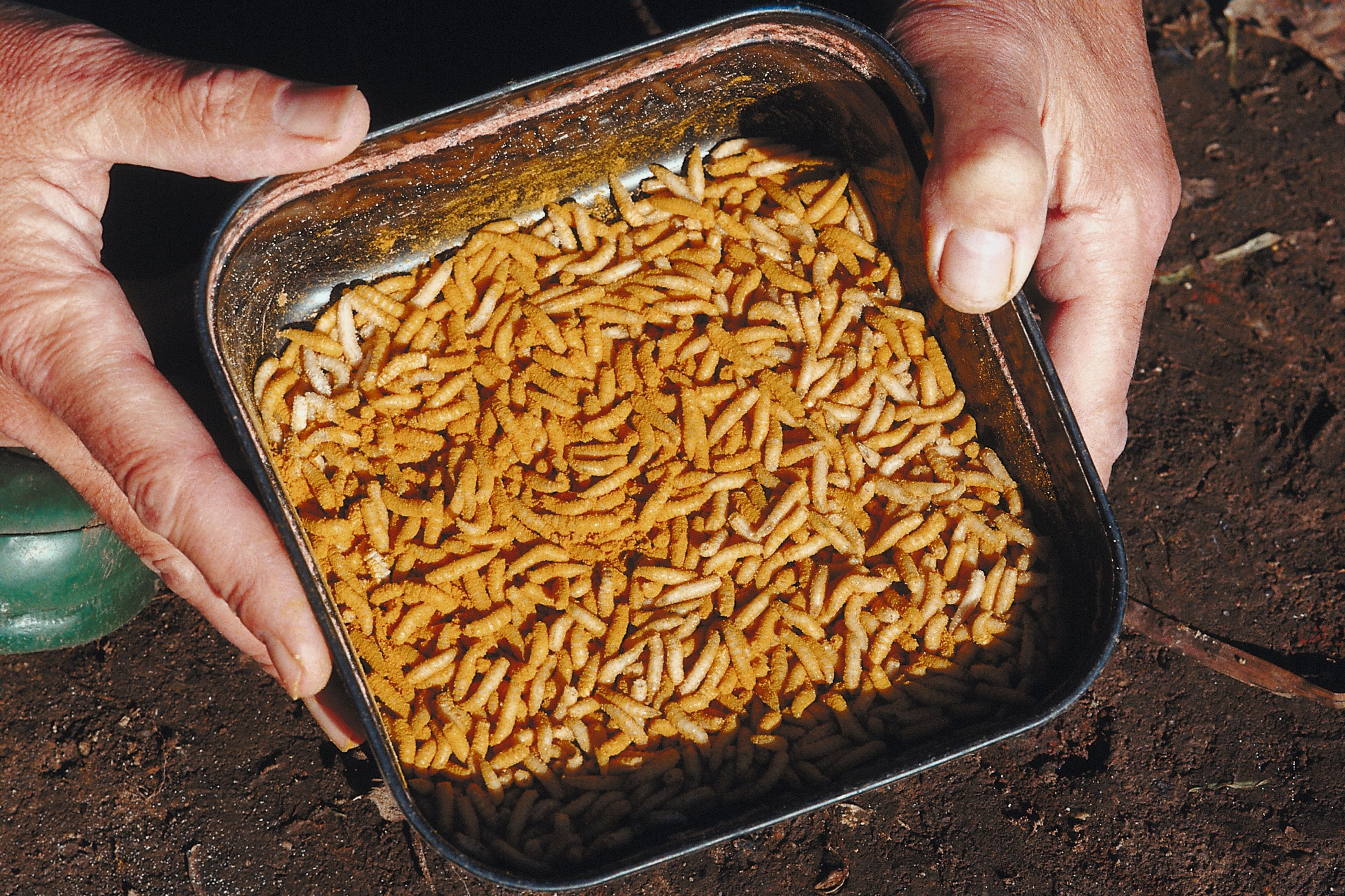 How to Color Waxworms | Gone Outdoors | Your Adventure Awaits