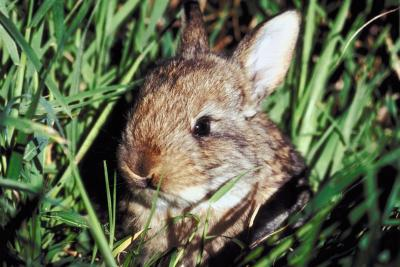 Flowering plants that deter rabbits home guides sf gate for How to deter rabbits from garden