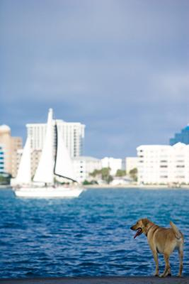 Cruises That Allow Pets Usa Today