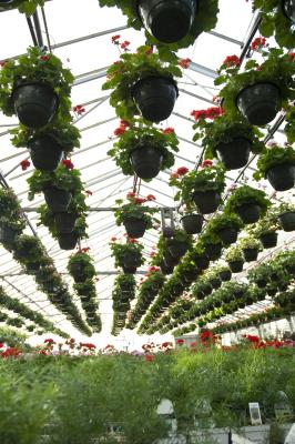 Types of Hanging Planters