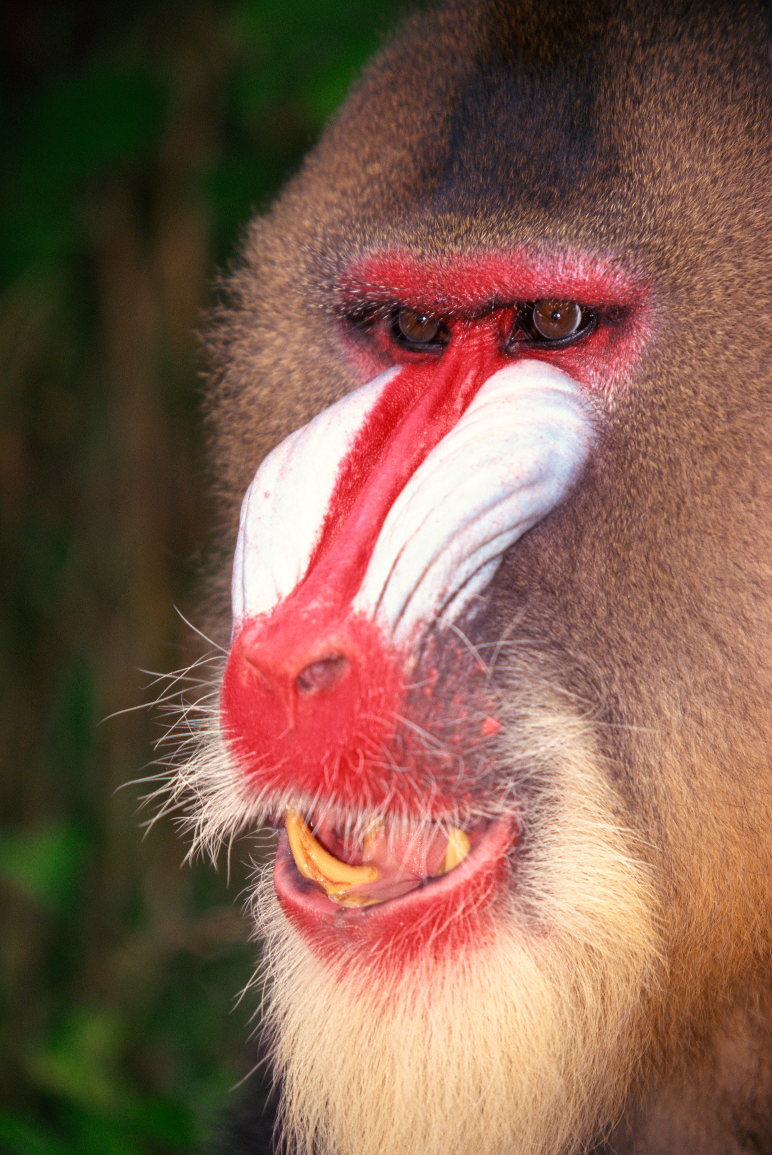 Animals Found in the Congo Rainforest | USA Today