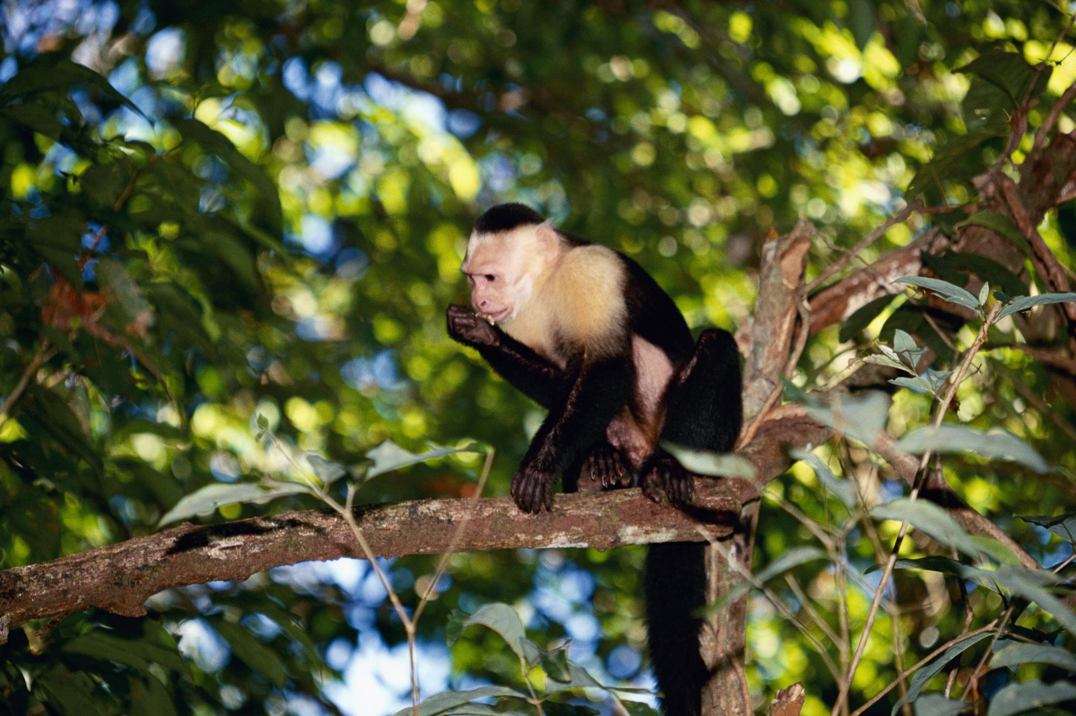Las Adaptaciones De Los Monos De La Selva