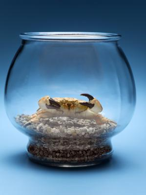 Types of Freshwater Aquarium Crabs Animals - mom.me