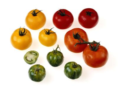 The best yellow tomato varieties home guides sf gate - Best romanian pepper cultivars ...