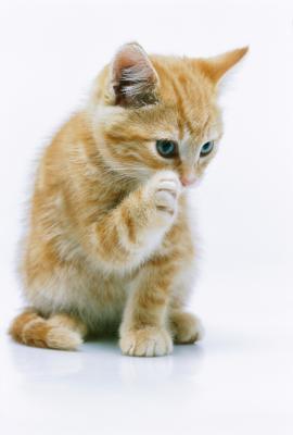 Cat Allergies And Dark Circles Under Eyes