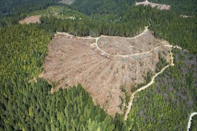 Soil erosion due to rainforest deforestation the for Soil synonym