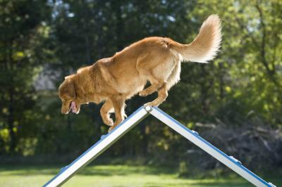 K-9 Obstacle Course Sp...