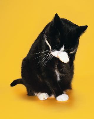 cat face photo app