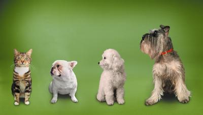 What Does A Quot Pecking Order Quot In Dogs Mean Dog Care