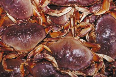 how to become a crab fisherman