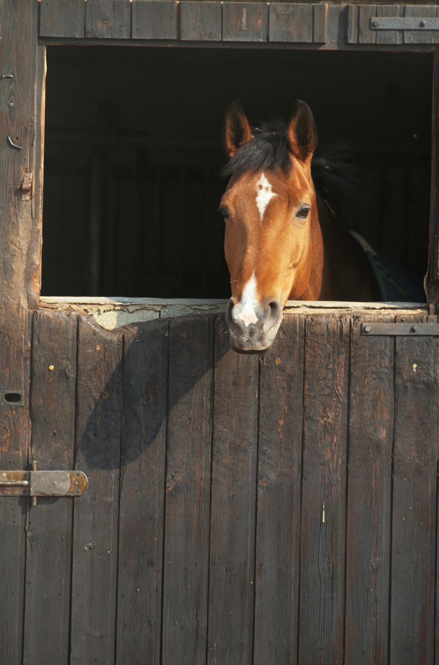 How To Build A Horse Stall Door Animals Mom Com