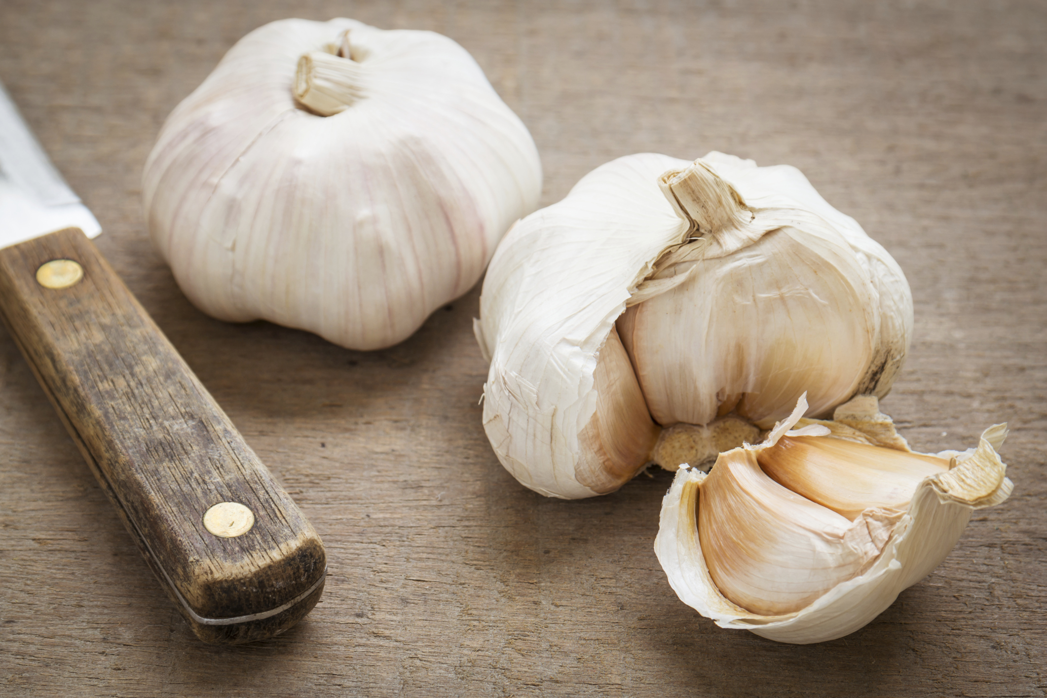 Than garlic is dangerous to humans
