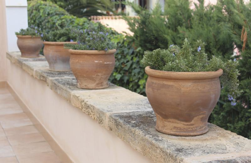 Will Rosemary Herbs Grow Healthy In A Pot Home Guides