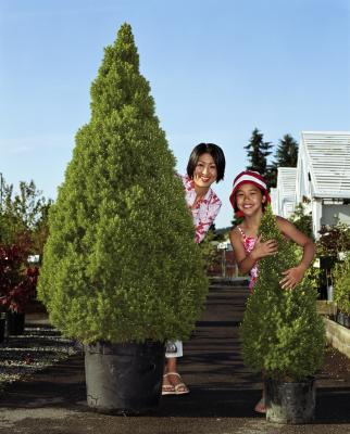 How to Grow Evergreen Trees Inside in Pots   Home Guides   SF Gate