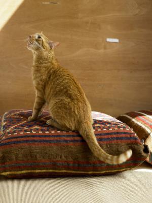 Make Cat Stop Meowing At Night