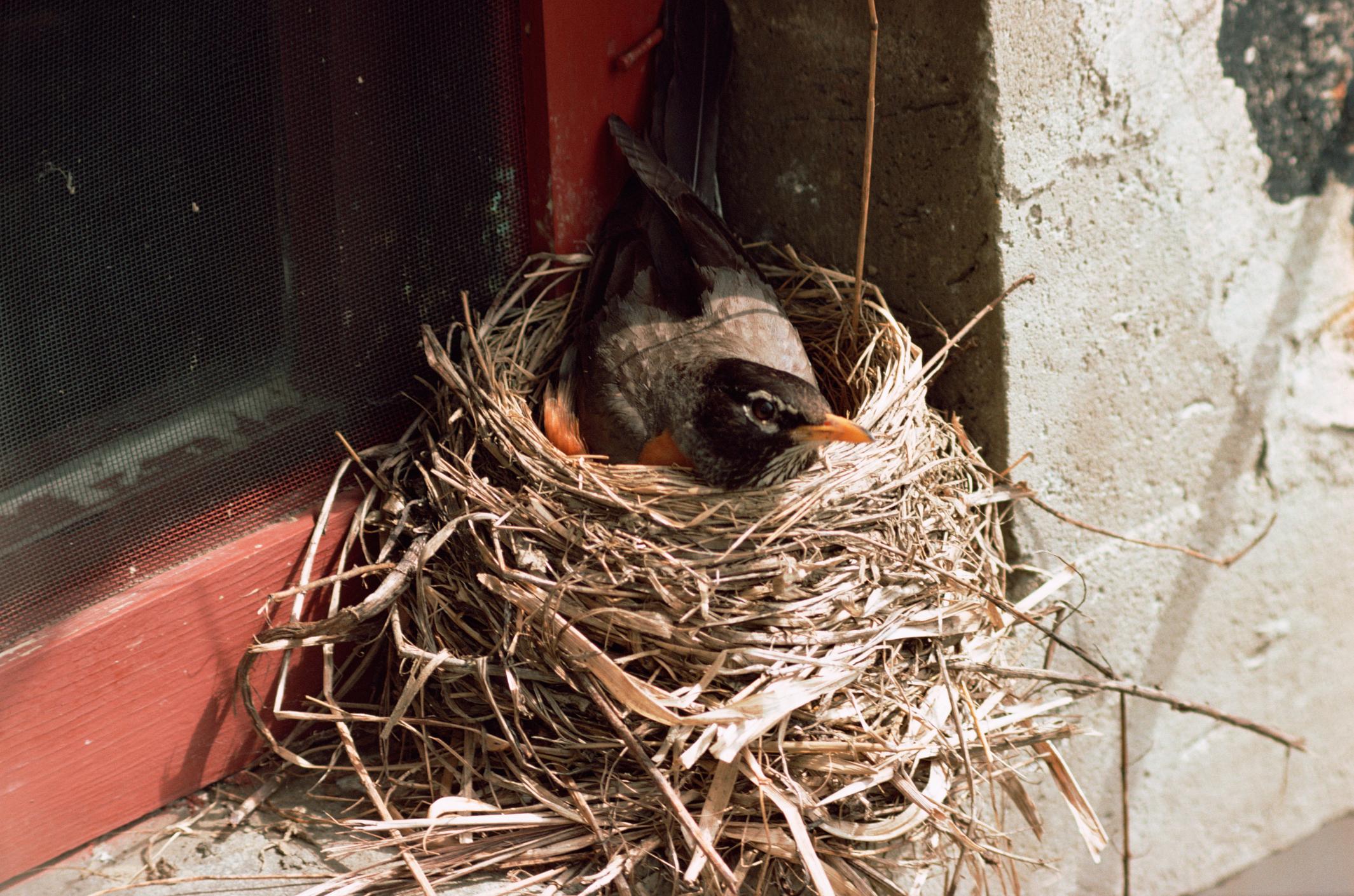 How to Keep Birds Off Window Ledges | Cuteness