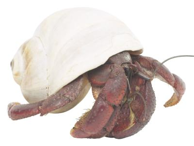 Homemade Hermit Crab Habitat Homemade Hermit Crab Habitat