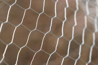 Ideas For Plant Protection With Chicken Wire Home Guides