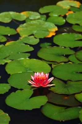 Information On Plants That Live In Water Home Guides