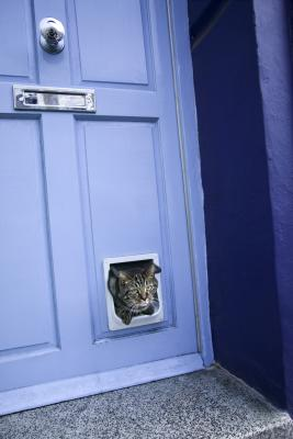 Use decorative molding around the door to dress up your cat door.