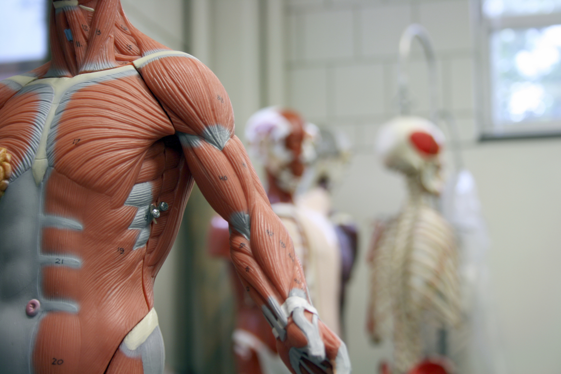 A Description of Tendons, Ligaments and Muscles | LIVESTRONG.COM