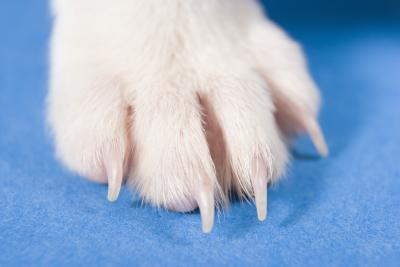 Will a Dog Regrow a Lost Nail? | Dog Care - Daily Puppy