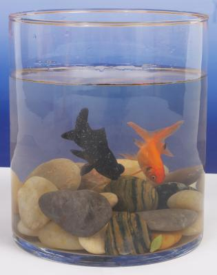 The best way to clean aquarium rocks pets for How often should you clean a fish tank