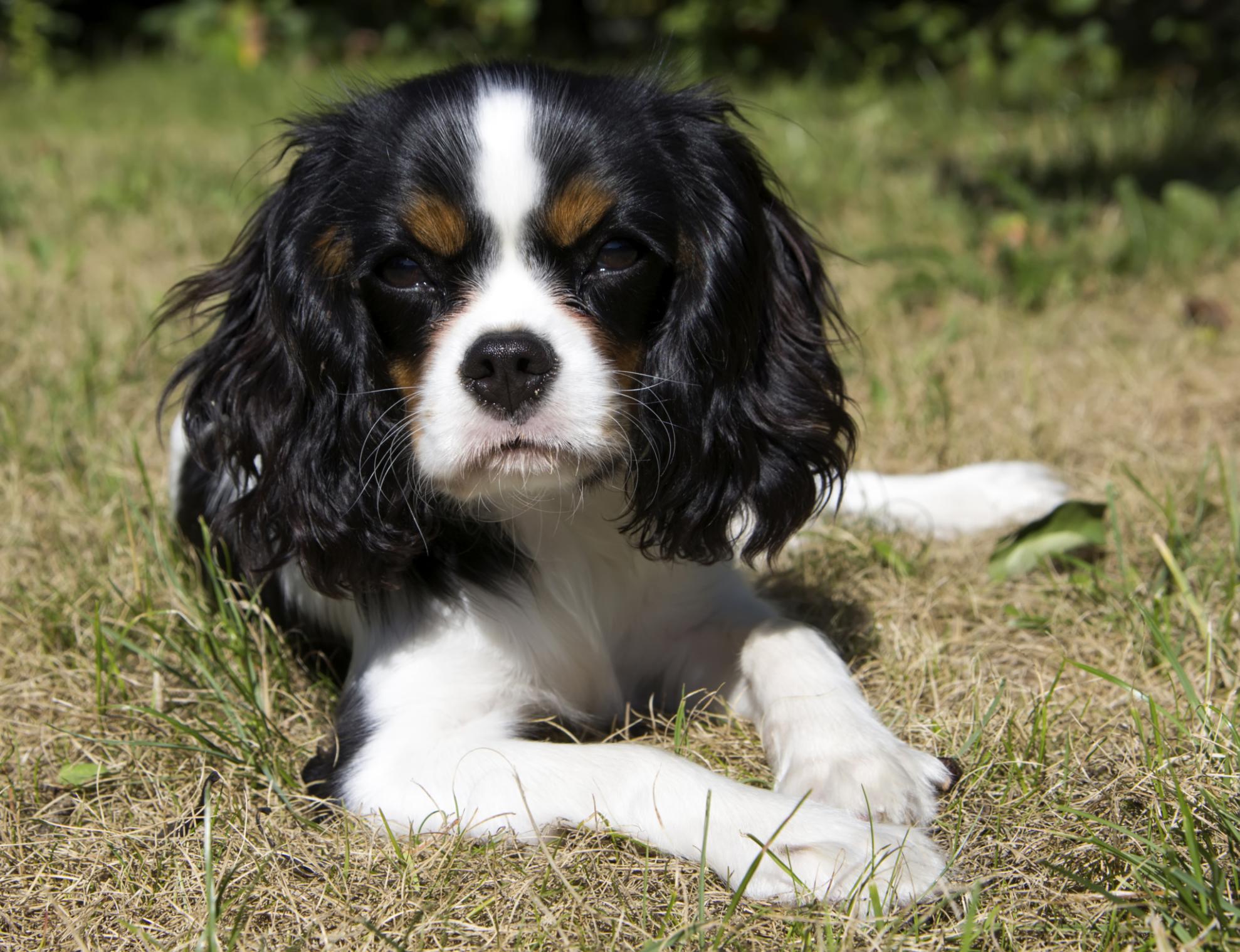Signs of Dog Inbreeding | Cuteness