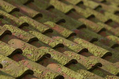 How To Remove Moss From A Roof With Detergent Home