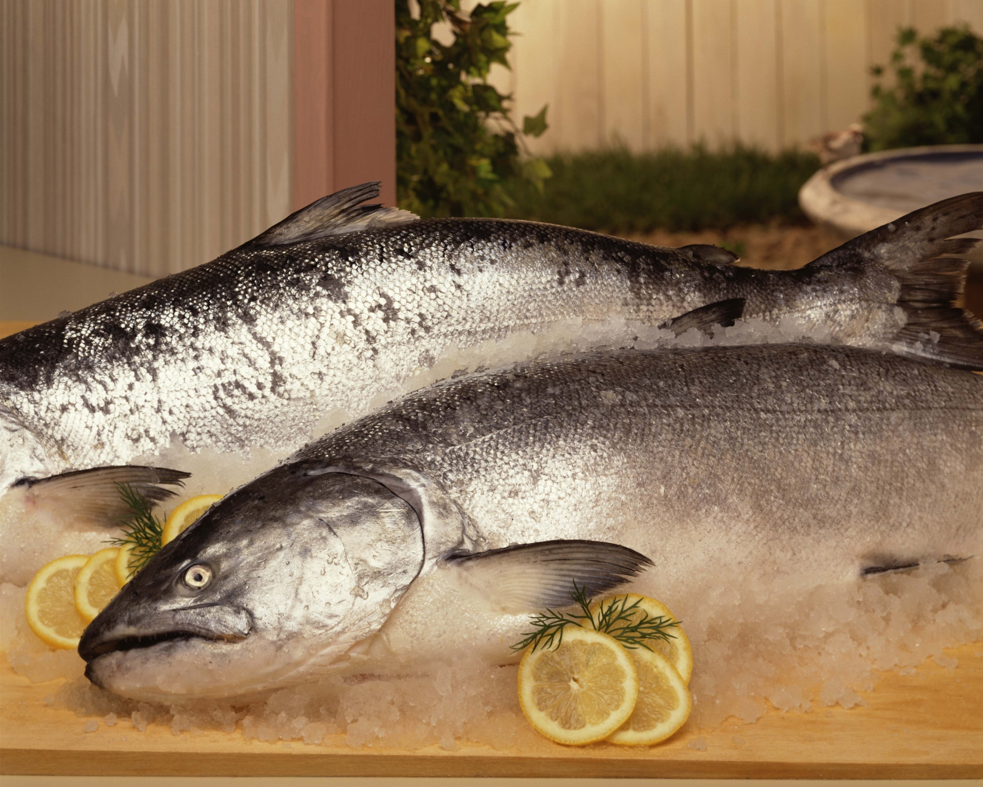 Salmon are selenium--rich fish.