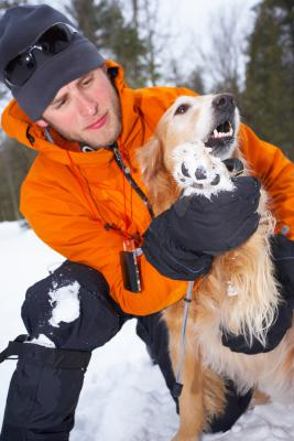 In the winter, ice and snow caked in a dog's pads can cause cuts and sores.