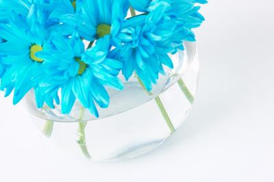 how to keep cut gerbera daisies from drooping