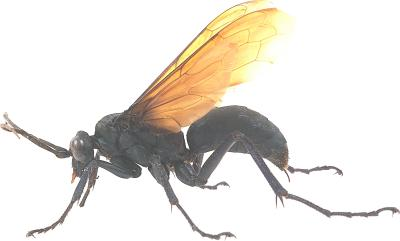 Natural Way To Kill Ground Wasp