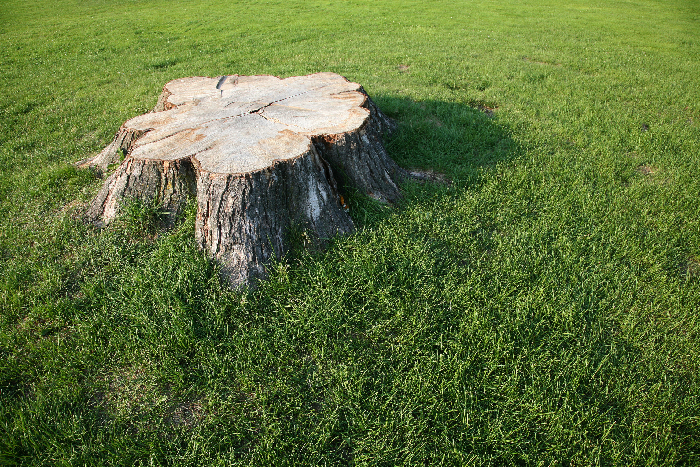 Home Remedies to Kill a Tree Stump | Home Guides | SF Gate