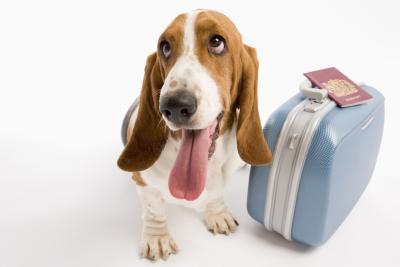 Dog Friendly Motels Near I 95 In South Carolina