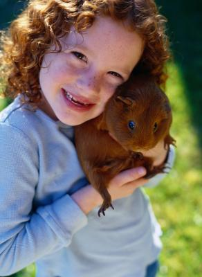 Guinea Pig Activities to Do With Kids Our Everyday Life