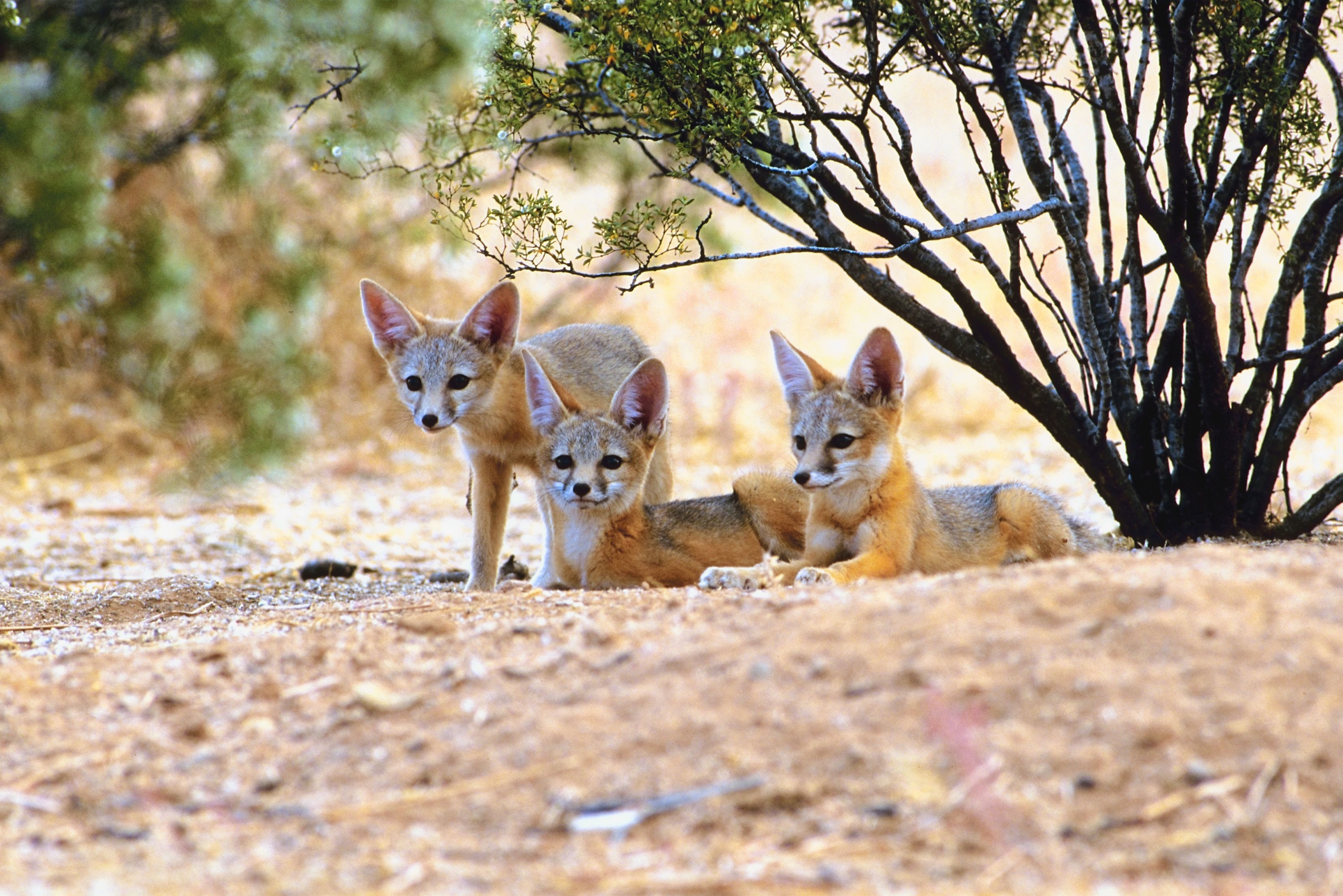 Animals That Live in the Hot & Dry Desert