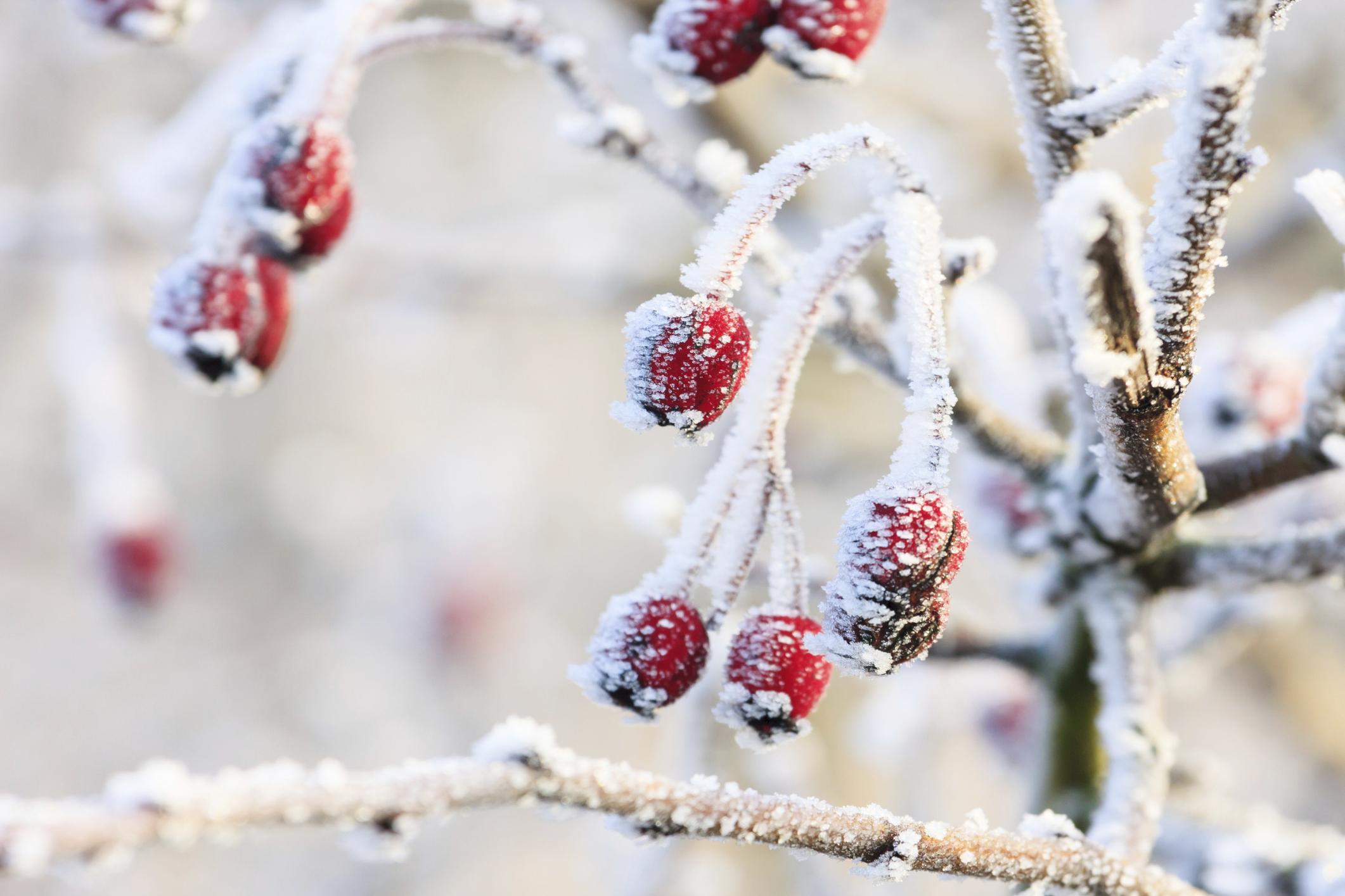 cmo hacer nieve casera para decorar el rbol de navidad ehow en espaol