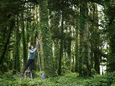 How to Kill Ground Vines Without Harming Trees | Home Guides | SF Gate