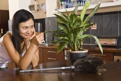 Las mejores plantas de interior conocidas por ser Plantas limpiadoras de aire